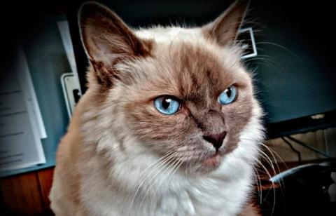 Про кошку Плюшу, которая оче…