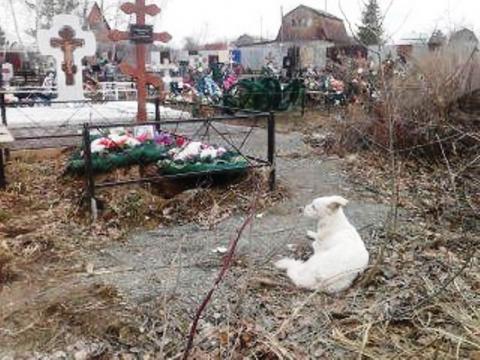 В Челябинске собака поселилась у могилы хозяина
