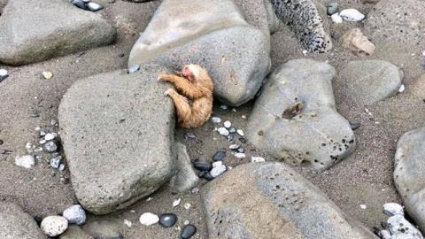 После прилива из-под камней …