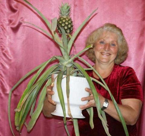 Вы можете вырастить эти продукты дома сами!