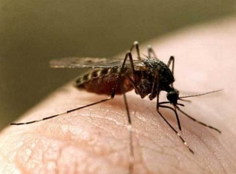 НЕХИТРЫЕ ХИТРОСТИ. Как бороться с комарами