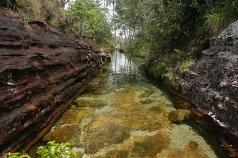 Волшебная река Каньо Кристал…