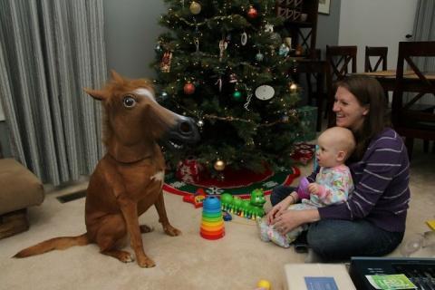Животные против Нового года …