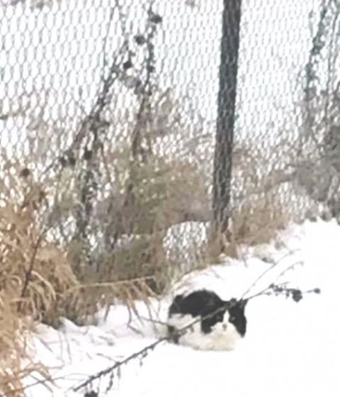 Истощенная кошка замерзала у дороги, не зная, что помощь уже близка...