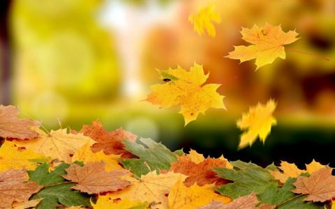 «Что-то тяжко мне на душе! Осень всему виной». Как преодолеть хандру осенью и полюбить пасмурную погоду?