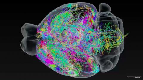 Картинка и видео дня: 300 нейронов в 3D