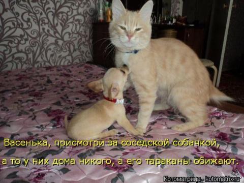Смотрим новые котоматрицы!