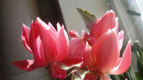 Комнатные цветы. Вырастила сама!