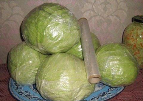 Как сохранить капусту свежей…