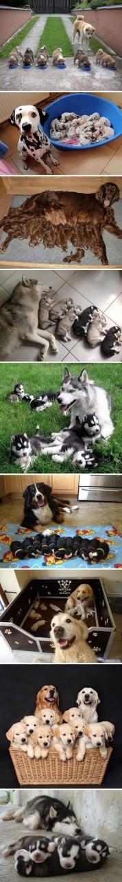 Эти фотографии щеночков и их…