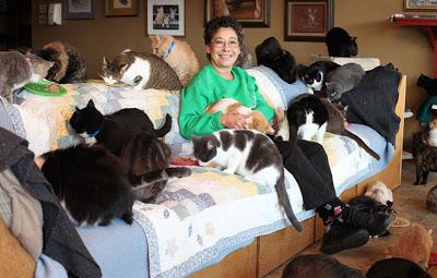 Женщина живет с 1000 кошек (видео)