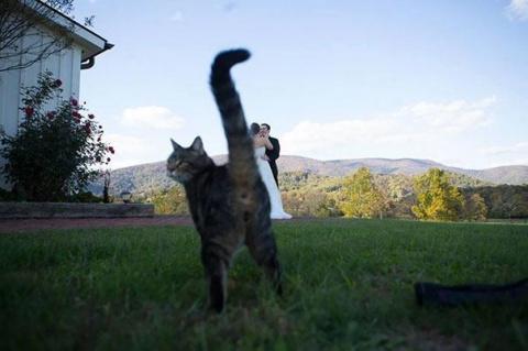 20 котов, которые появились …