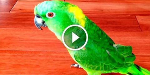 Попугаи — признанные гении п…