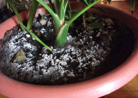 Проблемы почвы комнатных растений и можно ли выращивать цветы без почвы