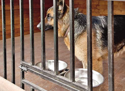 Породы собак для охраны участка