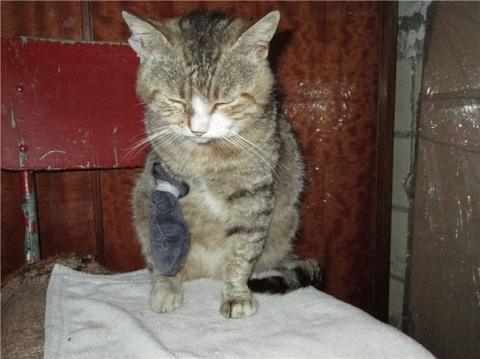 Как кот Батон дом нашел