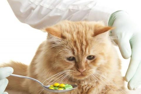 Медицинские процедуры для кошек. Как дать кошке таблетку