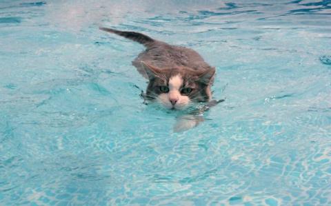Кто сказал, что коты не любят воду? Эти 14 снимков разнесут все стереотипы в пух и прах.