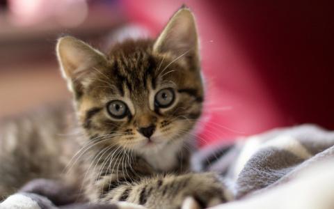 Чудо котенок по имени Шухер