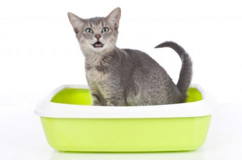 Чем кошка для сада полезна? Используем наполнитель для удобрения почвы