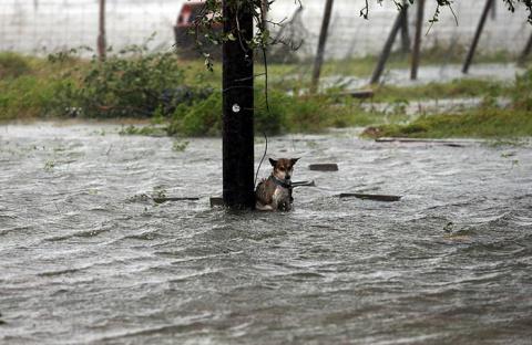 Фотограф спас собаку, котору…