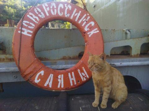 Любимец севастопольских моря…