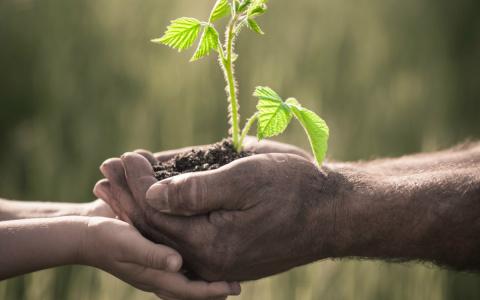 Как правильно посадить малин…