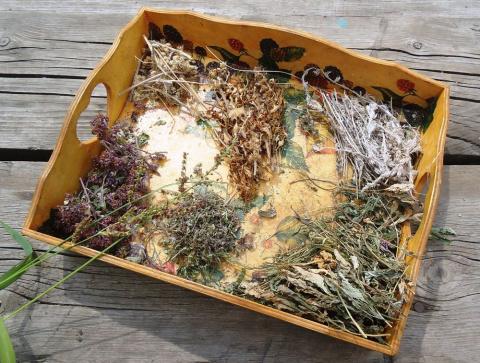 Лето — замечательная пора запастись полезными травами