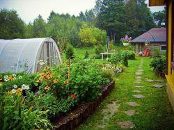 Дача, сад и огород: разбирае…