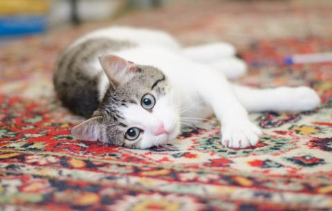 У кошачьего ребёнка не было детства, и только вы это можете исправить!!!