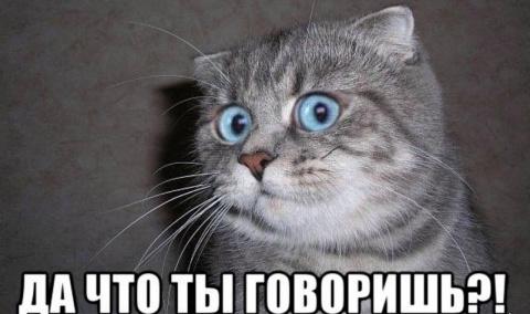 А вот коты…
