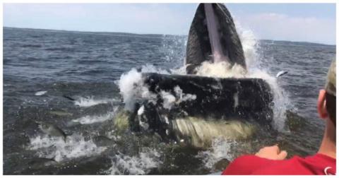 18-метровый горбатый кит вынырнул в метре от лодки с рыбаками