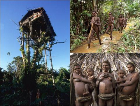Племя Короваи - дикари, живу…