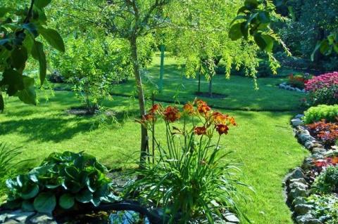 Ивы в дизайне сада