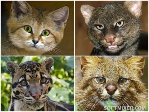 16 великолепных диких котов