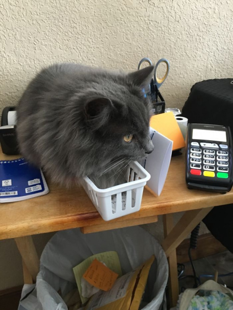 25 забавных фотографий, доказывающих, что кошки помещаются везде