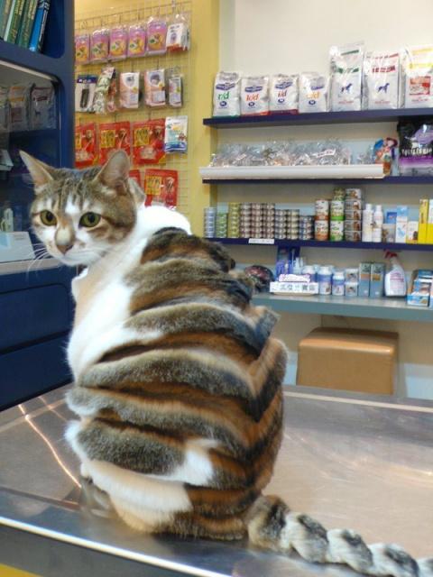 Кот стилиста  Зайцева.