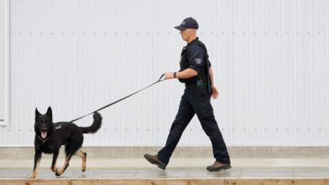 Полицейская собака открыла огонь из пистолета, преследуя преступника
