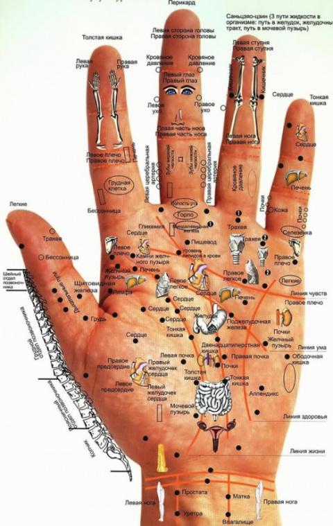 Узнайте свои болезни по рукам