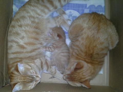 У котёнка вместо одной мамоч…