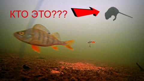 ЧТО ПРОИСХОДИТ ПОДО ЛЬДОМ КОГДА НЕ КЛЮЕТ??? Подводная съемка