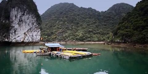 Путешествие по бухте Халонг и острову Катба (видео)