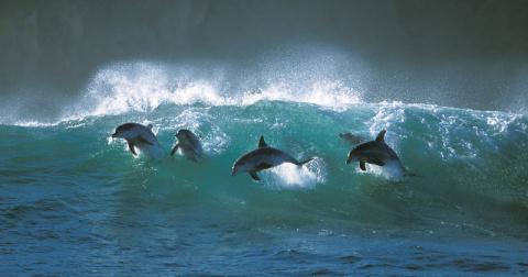 Интеллект дельфинов. Что умеют дельфины?