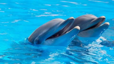 Франция ограничила содержание дельфинов в неволе