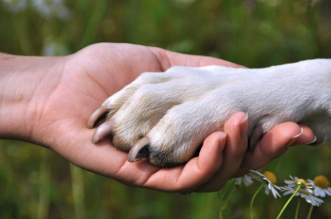 Собака - друг человека!