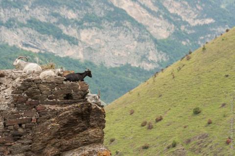 Живая древность: осетинские башни