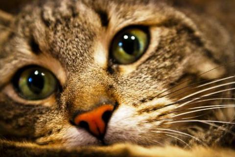 Как кошка Маша пошла на мировую с  хозяевами. Выдала себя, что все понимает, не удержалась!