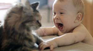 Кошки могут предотвратить ас…