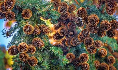 Природа — выдающийся художни…