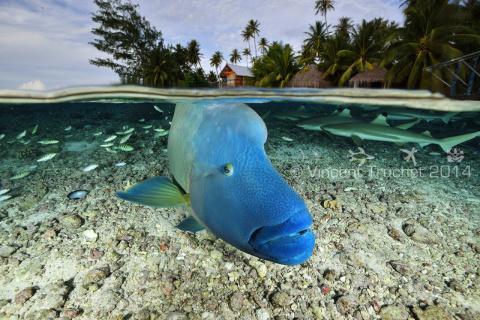 Яркий, живой и завораживающий подводный мир Винсента Трюше